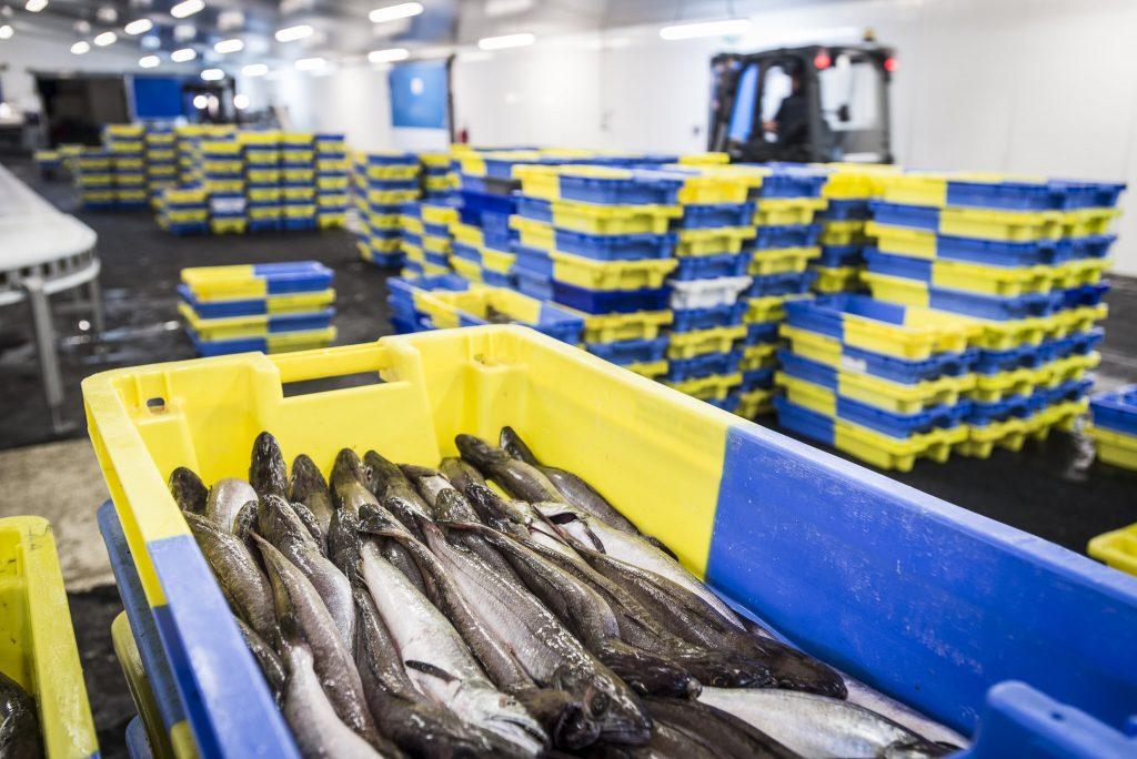 Bacs de merlus dans un entrepôt
