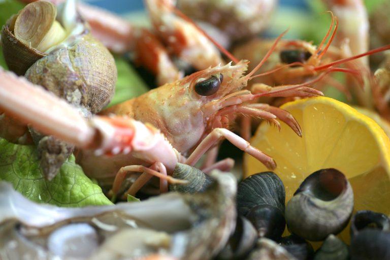 Un plateau de fruits de mer chez l'ostréiculteur à Saint Guillaume, Plouhinec.