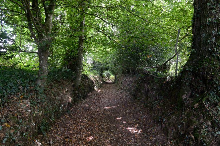 Chemin creux à Quistinic
