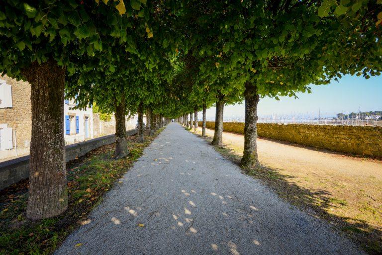 Chemin de balade sous les arbres à Port-Louis