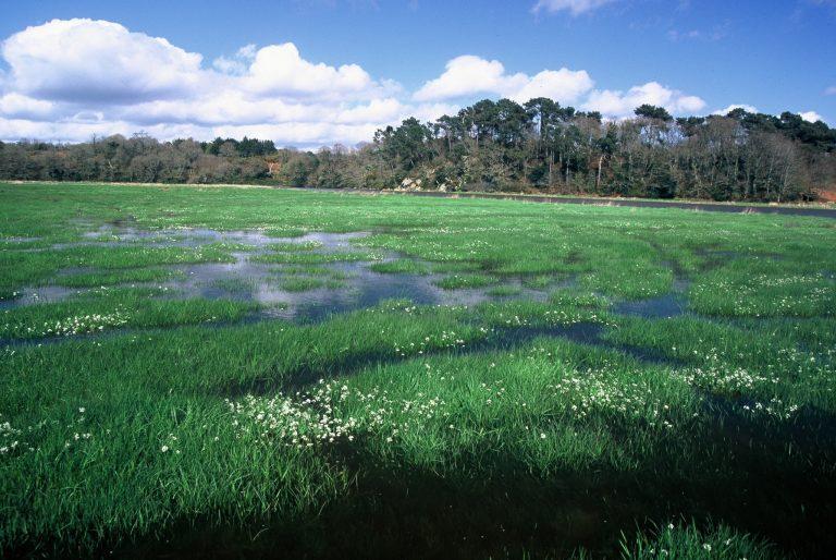 Marais dans l'estuaire du Scorff à Quéven
