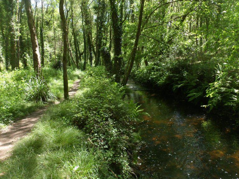 Chemin de randonnée le long de la rivière du Roc'h à Languidic