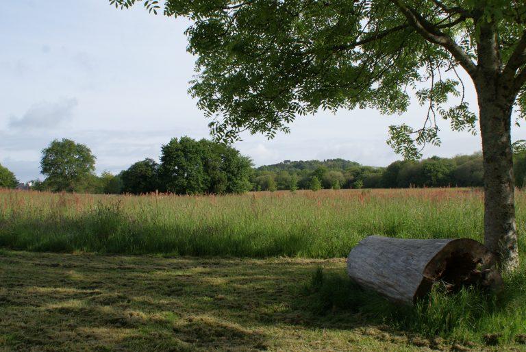 Rondin de bois dans la parc de Kerzec à Quéven