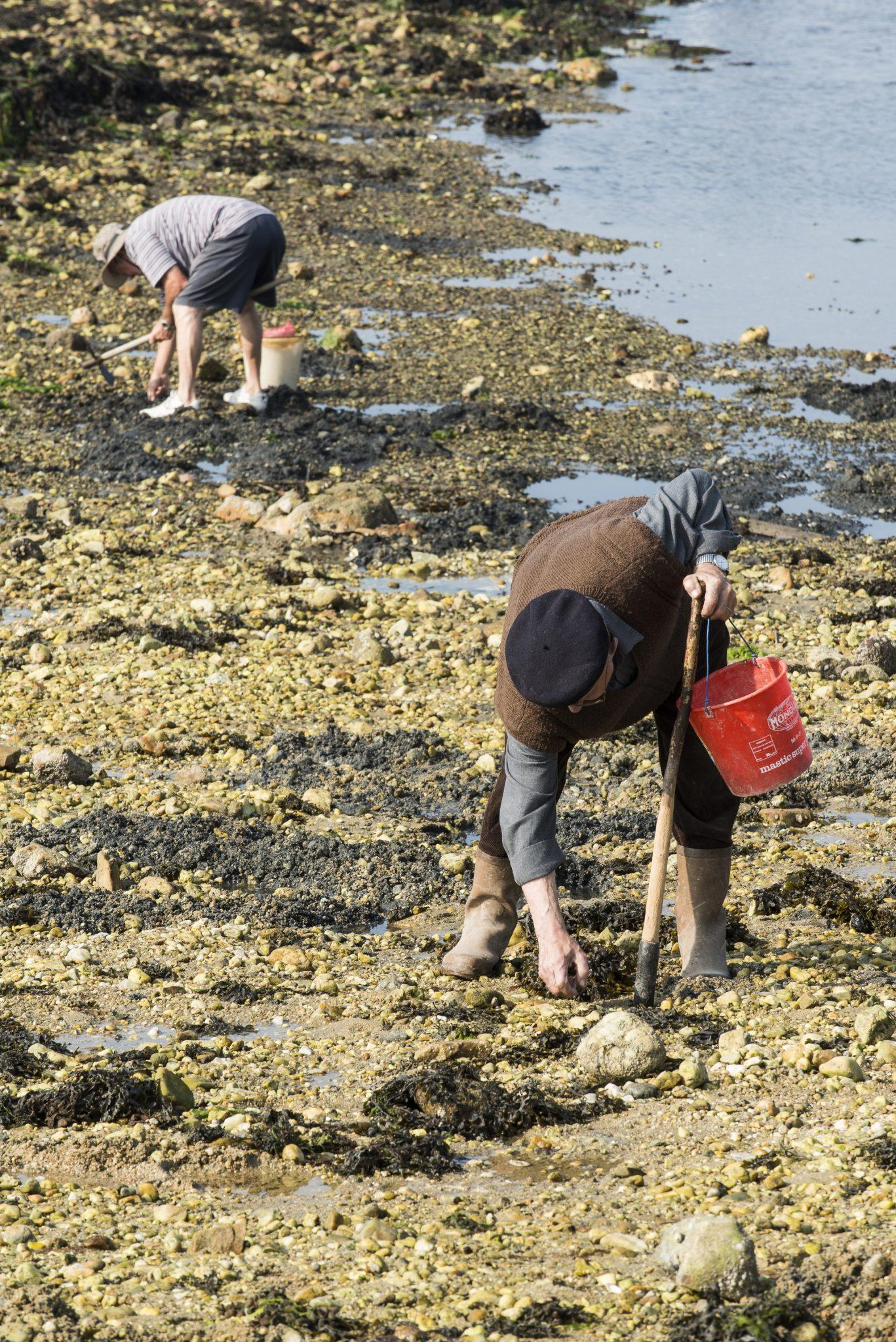 pêcheurs de coquillages à Riantec