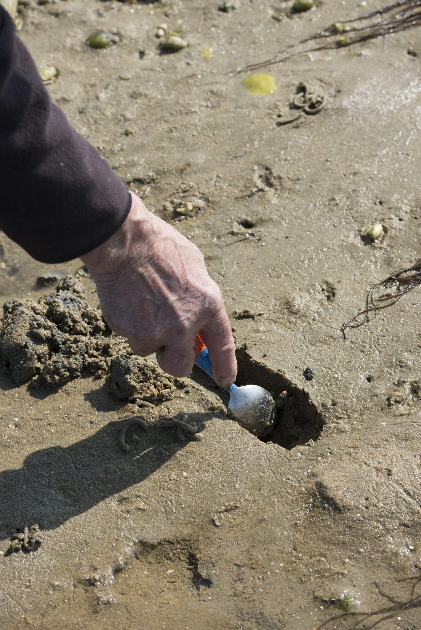 pêche à pied plage riantec