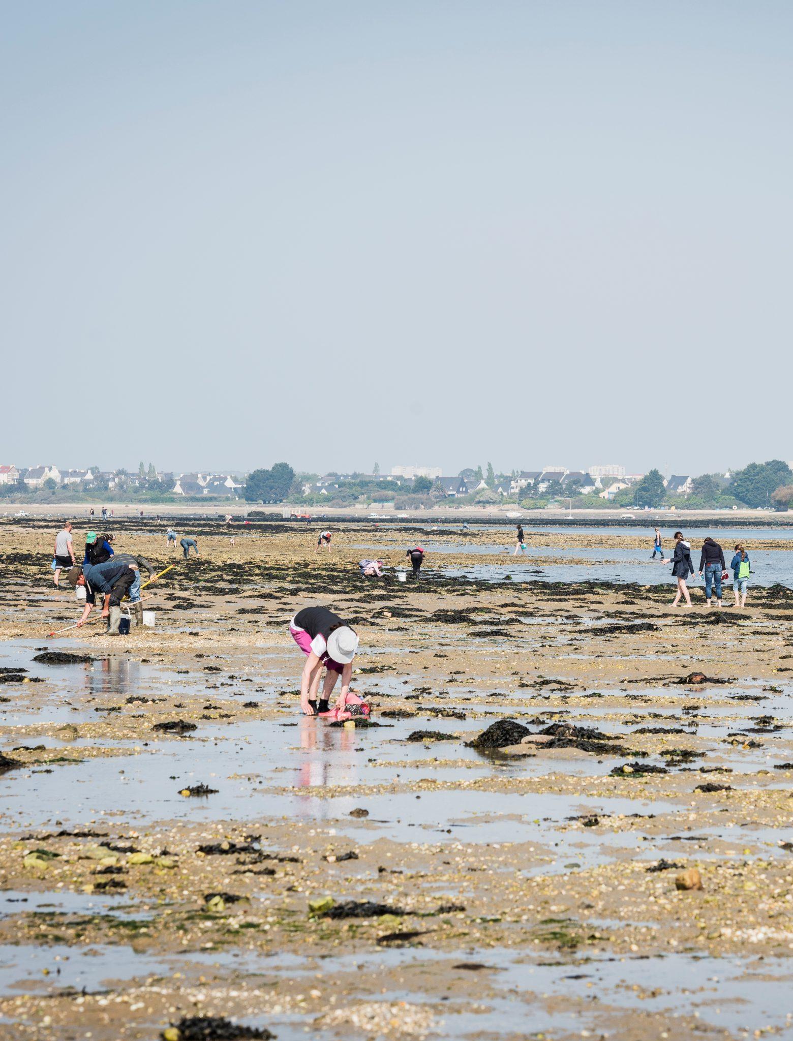 famille à la pêche à pied sur la presqu'île de Gâvres