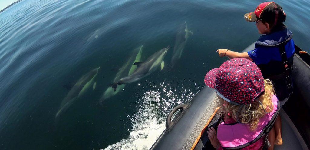 ocean-dauphins-lorient-port-louis-groix-morbihan-bretagne