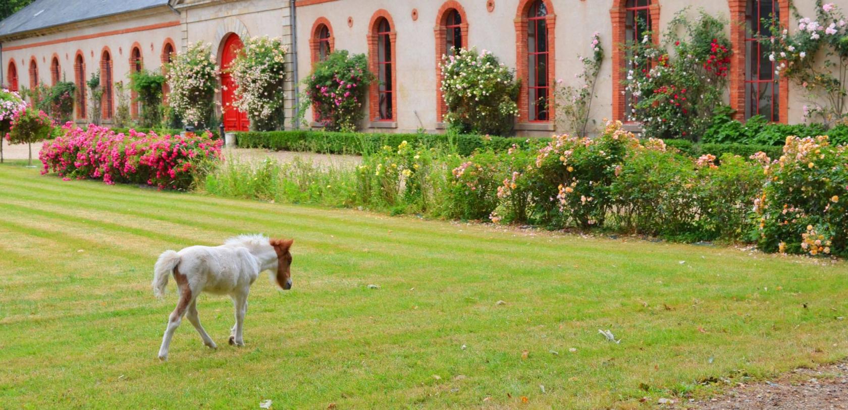 poney au haras d'hennebont