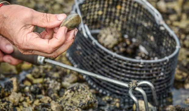 pêche de coquillage à gâvres
