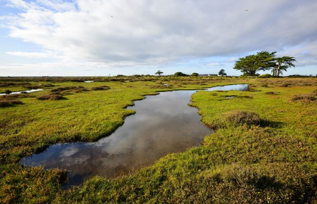 Les prairies maritimes, à marée haute de l'île de Kerner à Riantec