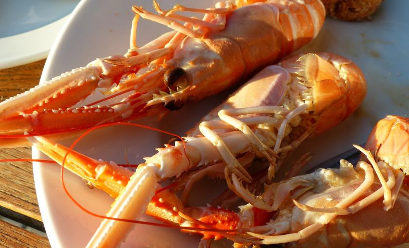 Assiette de langoustines débarquées au port de pêche de Lorient.
