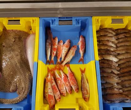 Caisses de poissons au port de pêche de Lorient