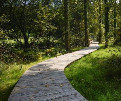Le Blavet, chemin dans les bois