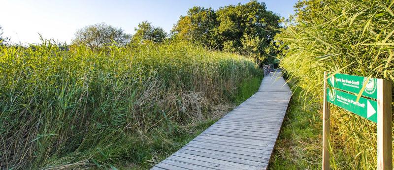 Chemin de randonnée pour balade à Pont-Scorff