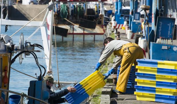 Débarquement de Langoustines au port de pêche de Lorient.
