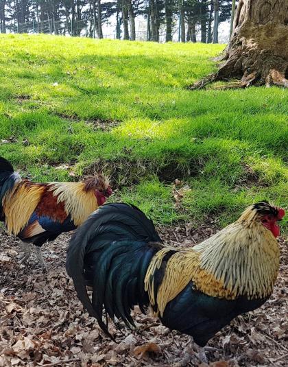 Des animaux sont à observer dans leur enclos, au sein du jardin Chevassu à Lorient.