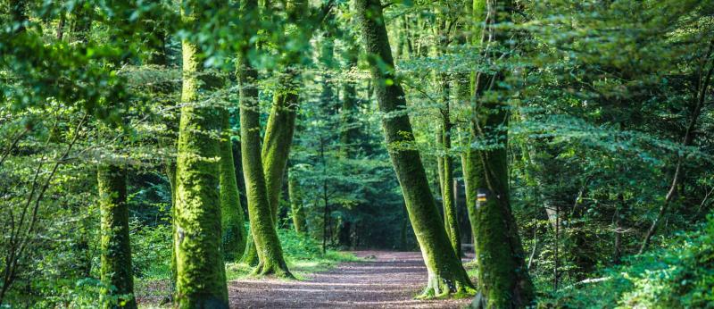 Forêt domaniale de Clohars-Carnoët