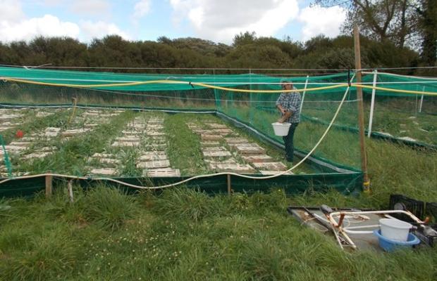 ©Escagoterie de Groix. L'élevage d'escargots sur l'île de Groix.