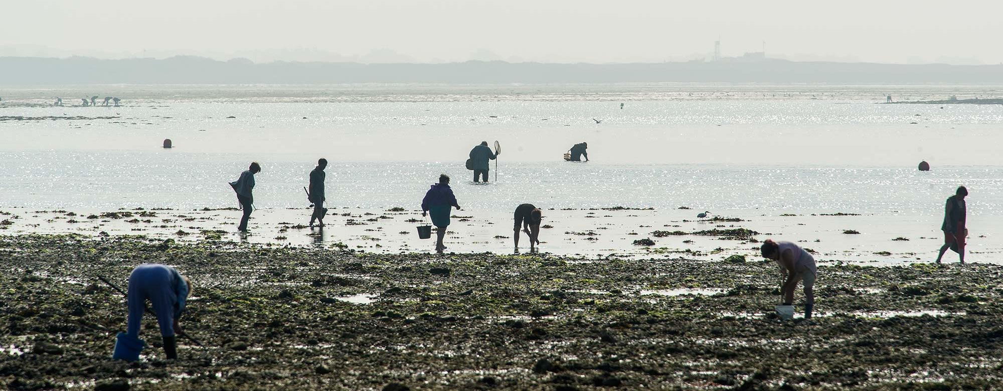 Pêche à pied à la Petite Mer de Gâvres, à Riantec