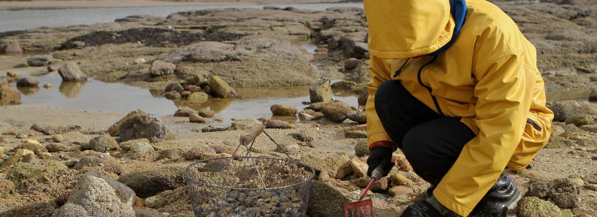 pêche à pied sur le littoral de Lorient Bretagne Sud, en toutes saisons pecheur de palourdes
