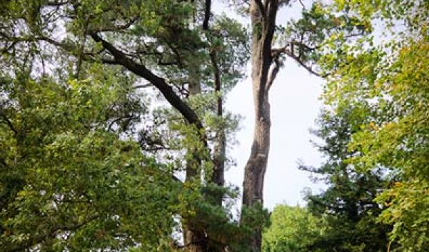 Les arbres historiques dans le parc du château du diable à Caudan