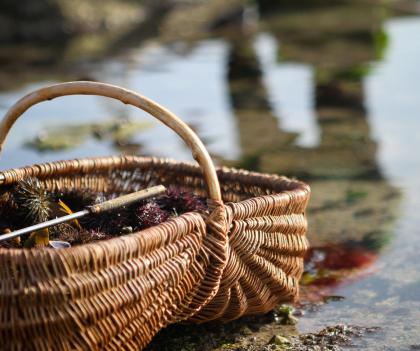 pêche à pied à Lorient Bretagne Sud coquillages crustacés palourdes coques bigorneaux crevettes