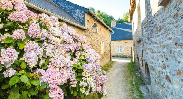 Hortensias dans une ruelle de Pont-Scorff