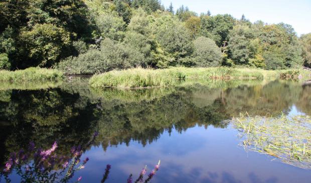 Rivière du Scave dans la forêt à Quéven